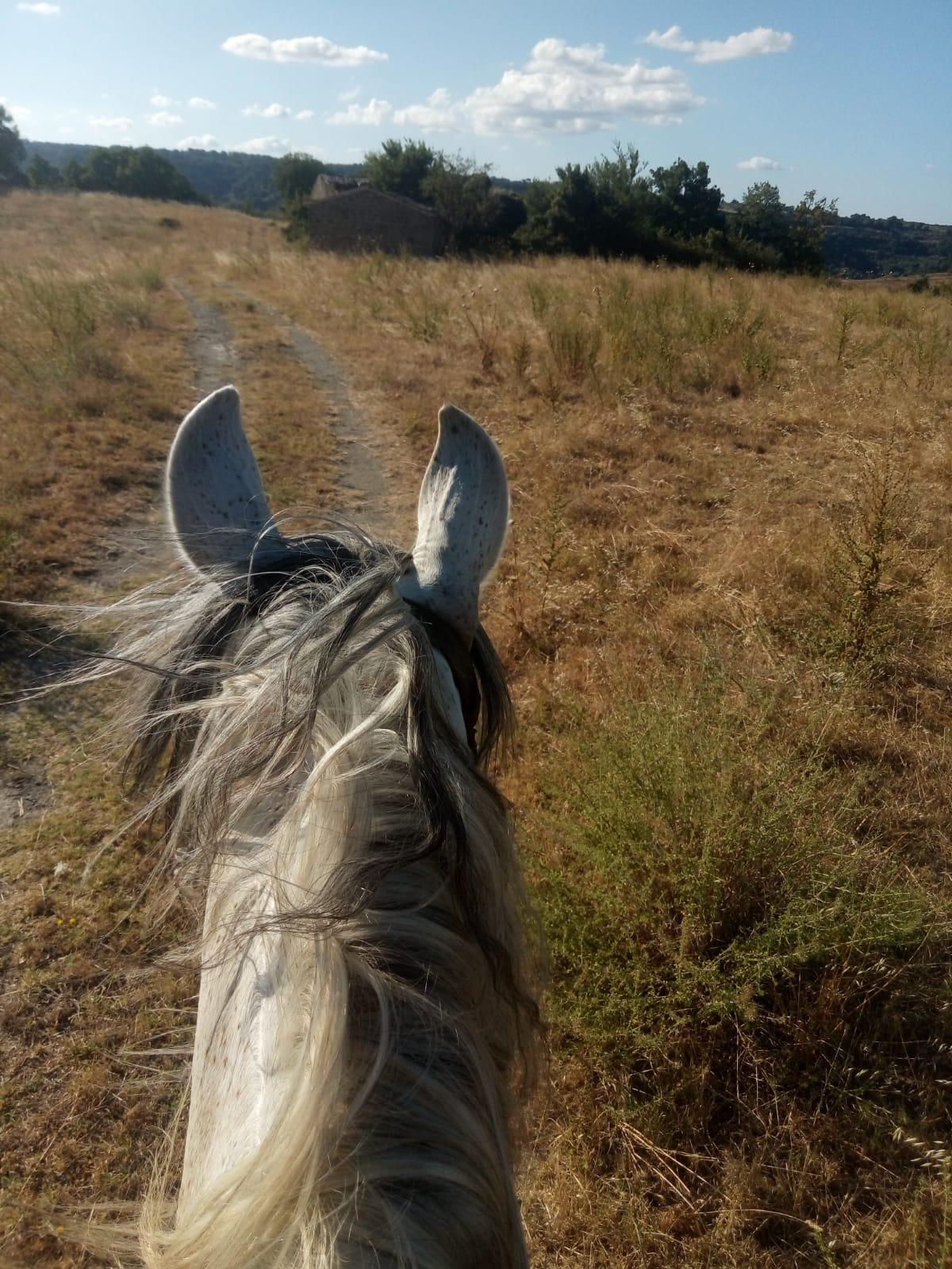 Agriturismo cavallo bolsena
