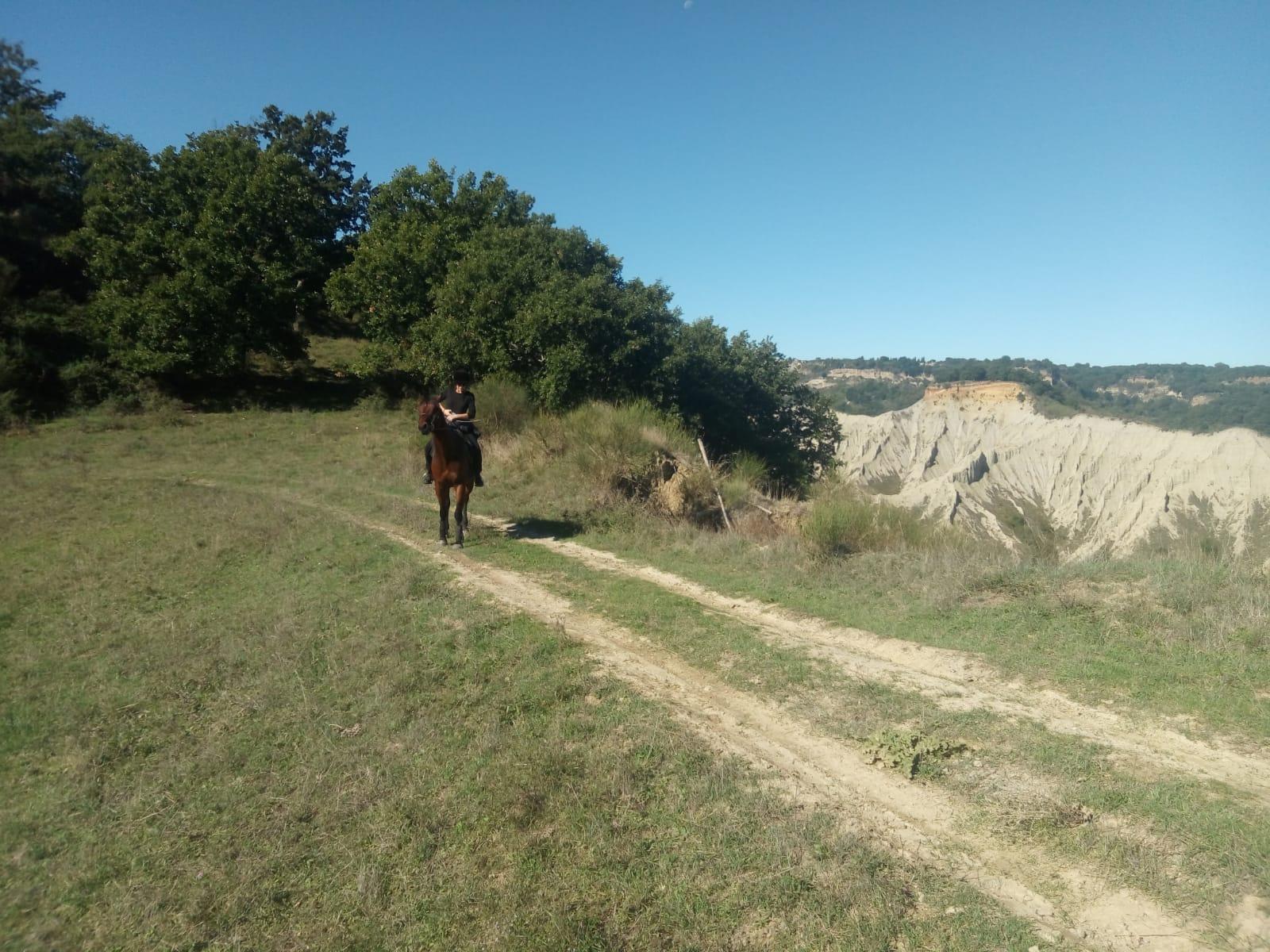Bolsena cavallo