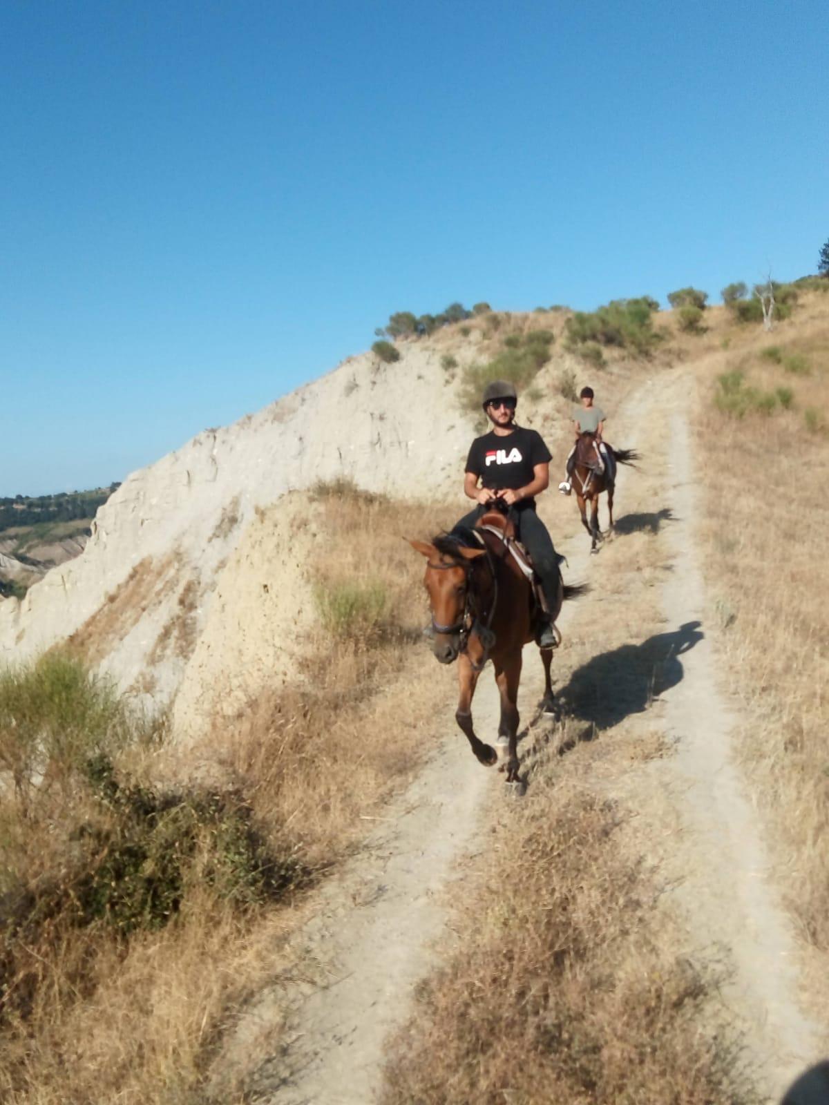 Orvieto horses